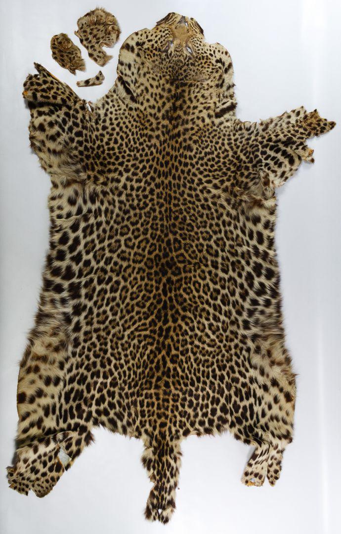 Leopard Skin Rug