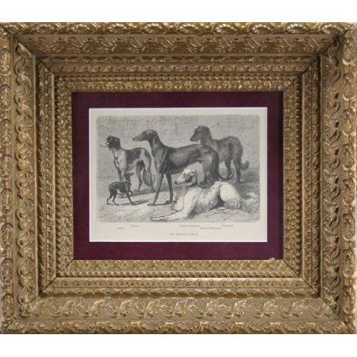 Antique Frame with Greyhound Family Print