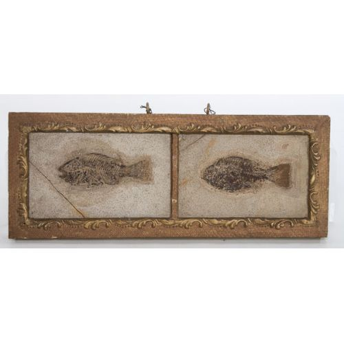 Fish Fossils in Double Frame