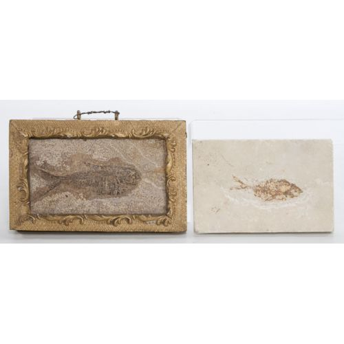 Fish Fossils; one in frame (2pcs)