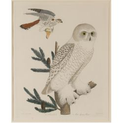 "View 2: A. Wilson (American, 20th Century) ""Snow Owl"" Print"