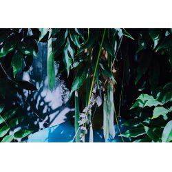 "View 3: Zohra Opoku (German / Ghanaian, b.1976) ""Wisteria"" Pigment Print"