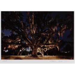 """View 3: Frank Relle (American, b.1976) """"Chestnut"""" and """"Oak"""" Photographs"""