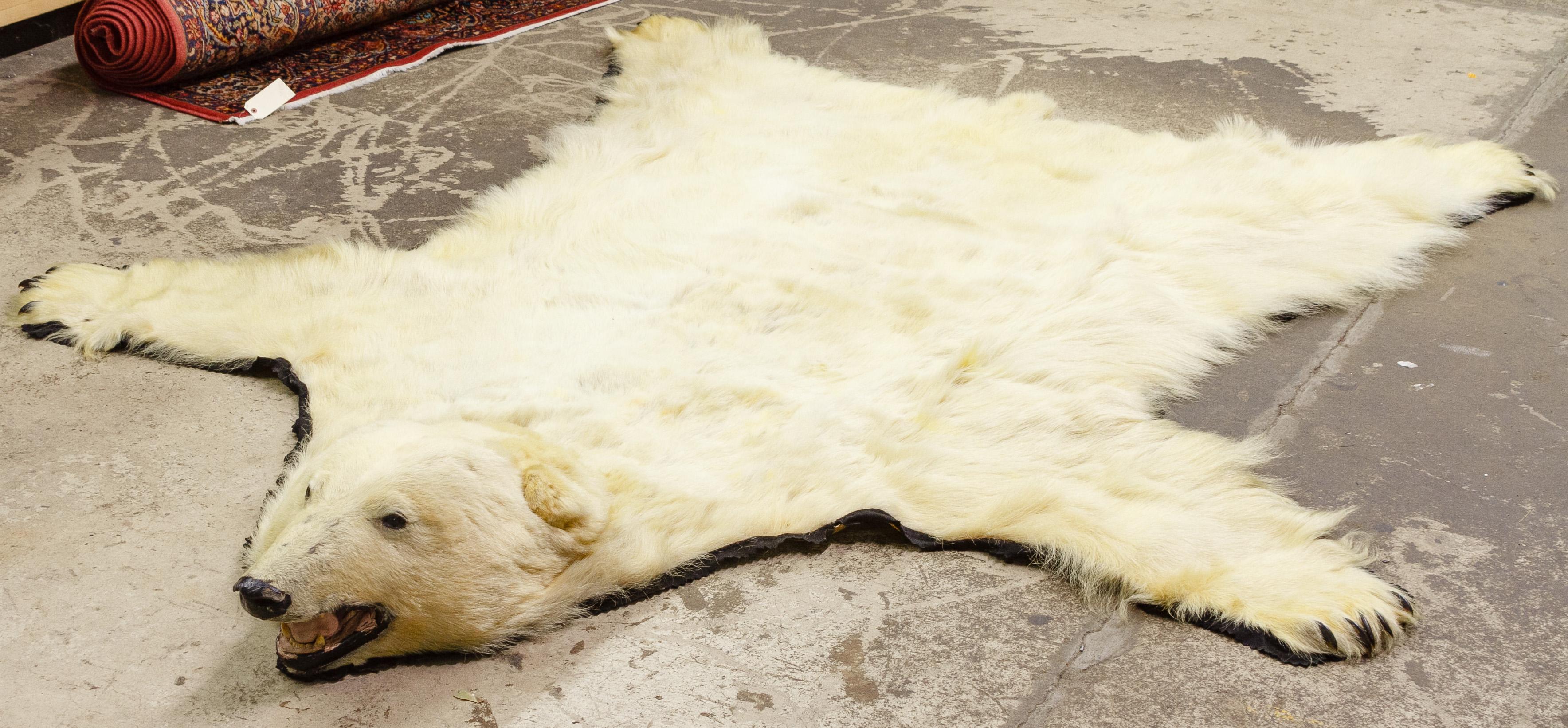Polar Bear Rug - Oct 16, 2016 | Leonard